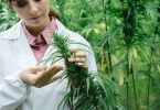 medical cannabis study