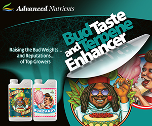 Advanced_Nutrients_Terpenes__Testing_Banner_Ad_300x250.jpg