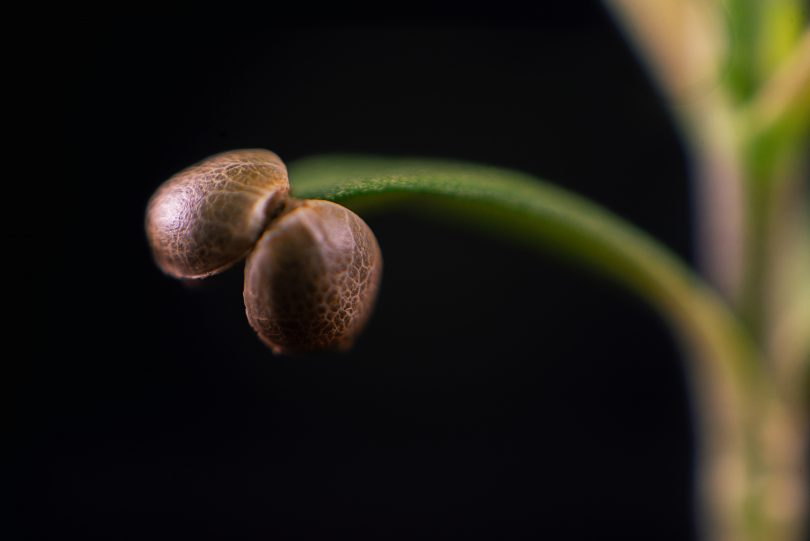 seed tests