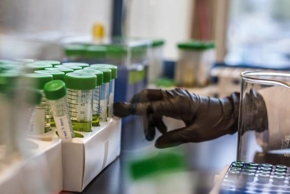 cannabis testing labs