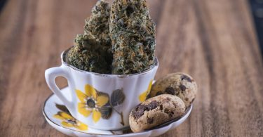 cannabis infused