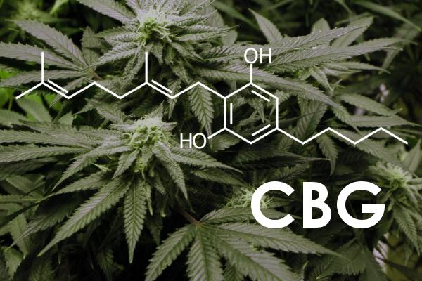why CBG is better than CBD