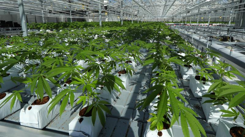 Village Farms International Announces Continued Expansion of Pure ...
