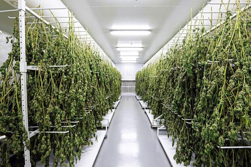 CANNATROL LAUNCHES FIRST-EVER PRECISION CANNABIS DRYING ...
