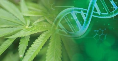 Cannabis Research