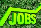 Job in the Cannabis Industry