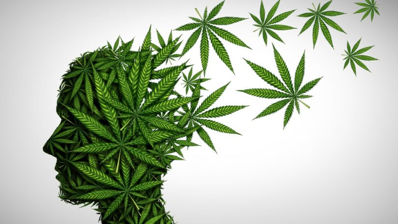 Oral THC Effects on Memory and Cognition - Terpenes and Testing ...